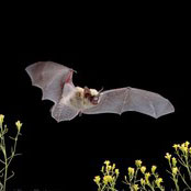Nature Night - The Beauty of Bats